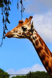 19 july Knowsley Safari Park