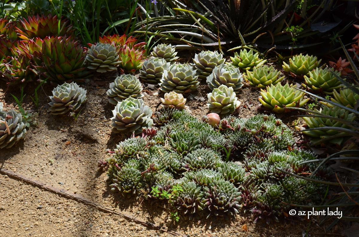 California Road Trip: Day 1 - A Hilltop Garden, Art and a Trip Down ...