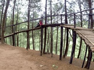 tangga jalan hutan pinus kita pacitan