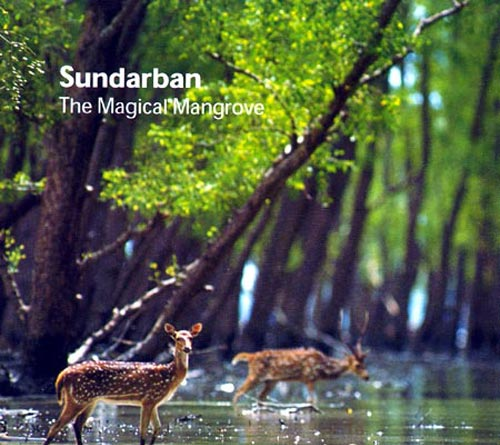 Search For Beauty In Bangladesh: December 2012