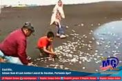 Usai Hiu, Jutaan Ikan di Laut Jember Loncat Ke Daratan, Pertanda Apa?