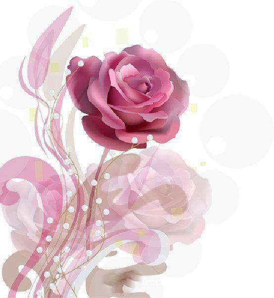flower rose photo