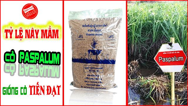 Tỷ lệ nãy mầm cỏ paspalum