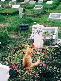 Kucing persia Yang sedih dan sakit ditinggal majikannya pergi selama-lamanya (meninggal dunia)