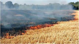 اندلاع حريق كبير على هكتار من القمح الصلب
