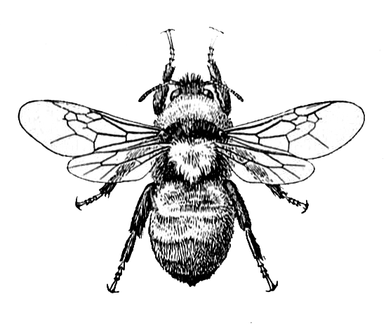 Bee Image and Dictionary Definition - Knick of Time