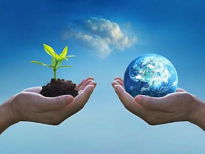 पौधे (Plants) - पर्यावरण Study Material for uptet,ctet, teacher vacancy