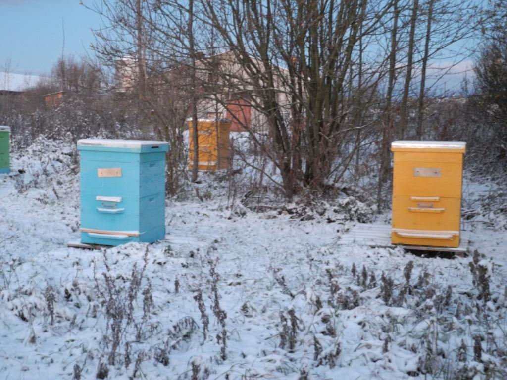 Купить пчелопакет у цебро, задницы