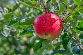 tipsbudy cara makan buah dengan kulit