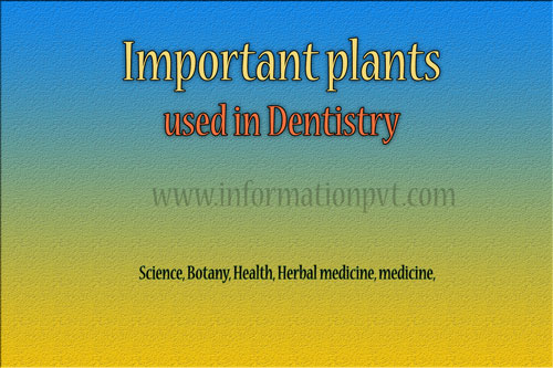 Important plants used in Dentistry