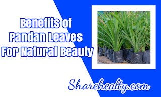 Benefits of Pandan Leaves for Natural Beauty