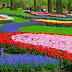 Ini Dia 6 Bunga yang Paling Langka di Dunia! Pernah liat?