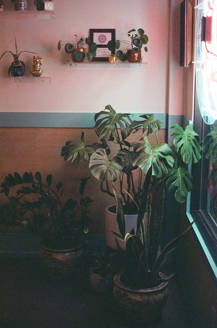 Panduan tanam pokok hiasan dalam rumah