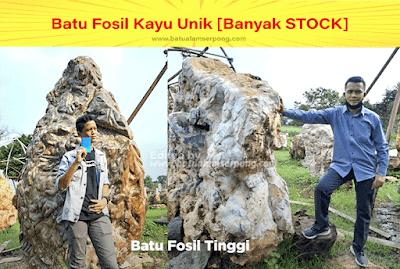 foto batu fosil kayu terbesar
