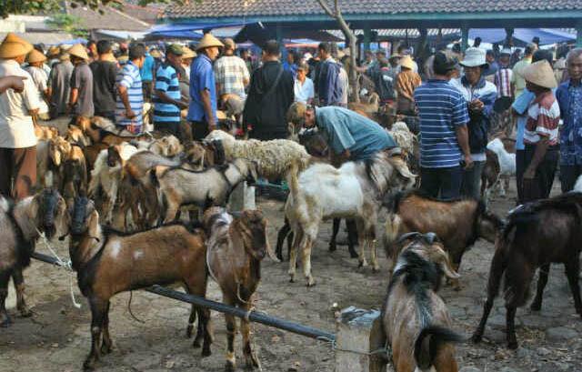 Harga Kambing 2018 Aqiqah Qurban Jakarta