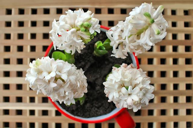 Wendy's Week Horses & Hyacinths - Blooming Hyacinths