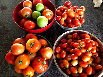 four large bowls overflowing with tomatoes