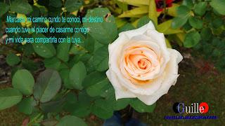 Una Flor para Ti -CGuilleO
