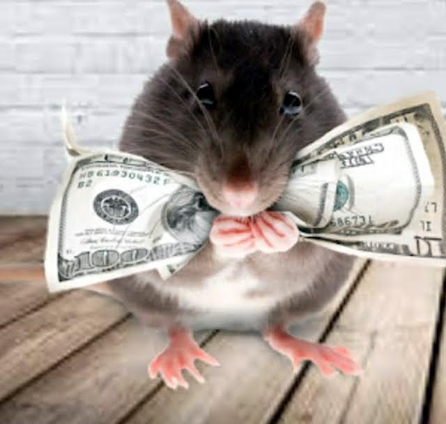"""""""Ratos e Ratazanas"""" J BARRETO"""