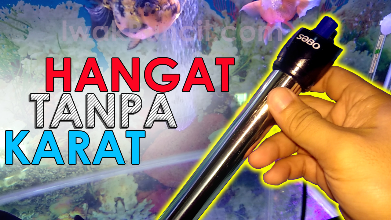 Rekomendasi Water Heater Anti Karat Sobo 50w 100w Penghobi Ikan Hias Wajib Punya Ini