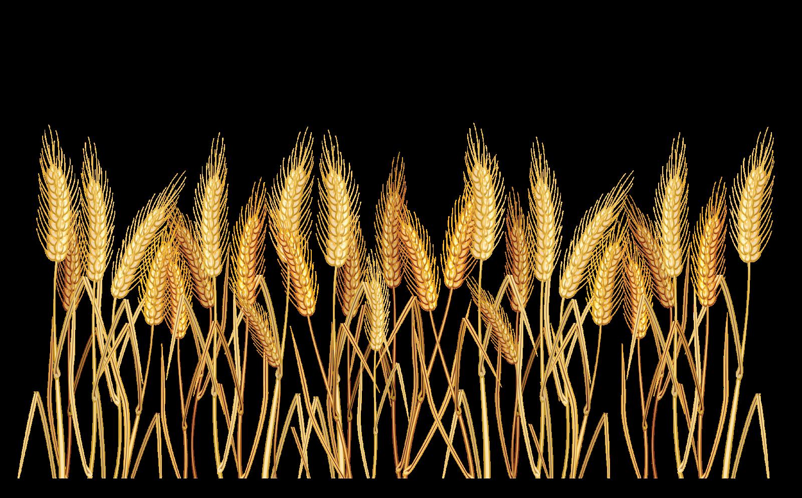 lacremania ramo de trigo candy corn clip art man candy corn clip art fun
