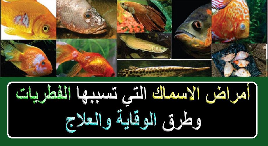 أمراض الاسماك التي تسببها الفطريات وطرق الوقاية والعلاج