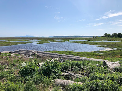 Boundary Bay Wetlands