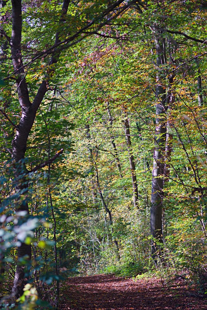 #292 Carl Zeiss Jena Sonnar f3.5 135mm – Herbstwaldweg