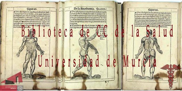 Biblioteca CC de la Salud Universidad de Murcia.