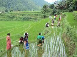 High Priority Budget in Agriculture in Nepal Budge 20202021