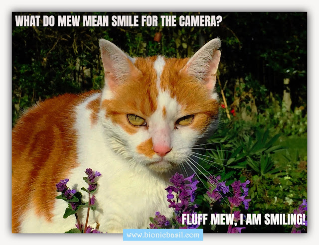 Friday Fluffers at BBHQ ©BionicBasil® Amber's Smile