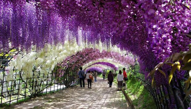 Resultado de imagen para El túnel de las glicinias en flor