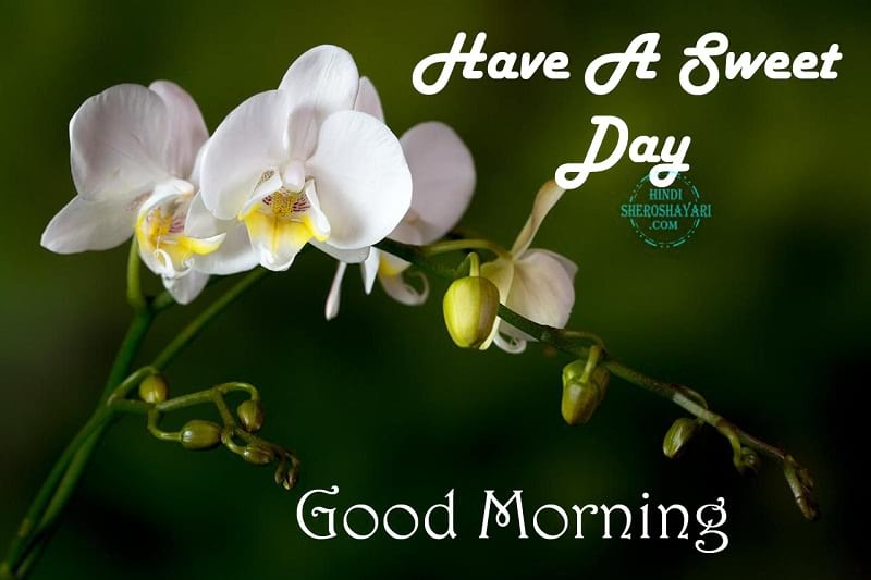 Good Morning Blessings With Orchids Flowers
