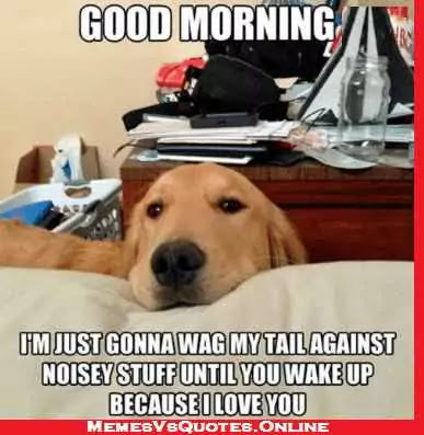 Good Morning  beautiful memes for her, dog wag noisey
