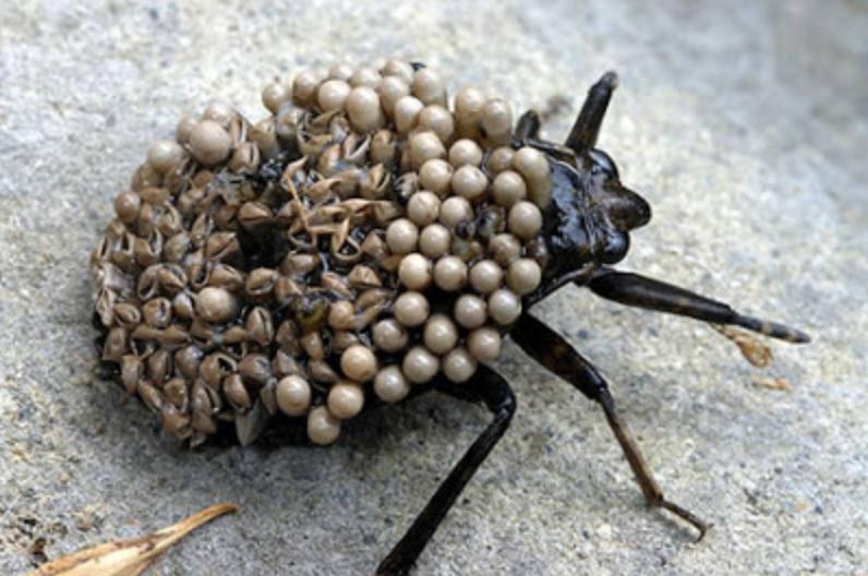 Serangga Berbahaya