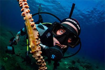 Productos para la pesca submarina