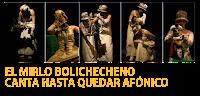 El mirlo bolichecheno canta hasta quedar afónico