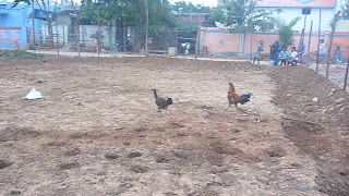 Organic Chicken Farm In India Organic Egg Omega 3 Free