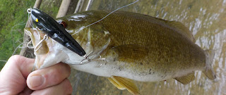 middle patuxent smallmouth