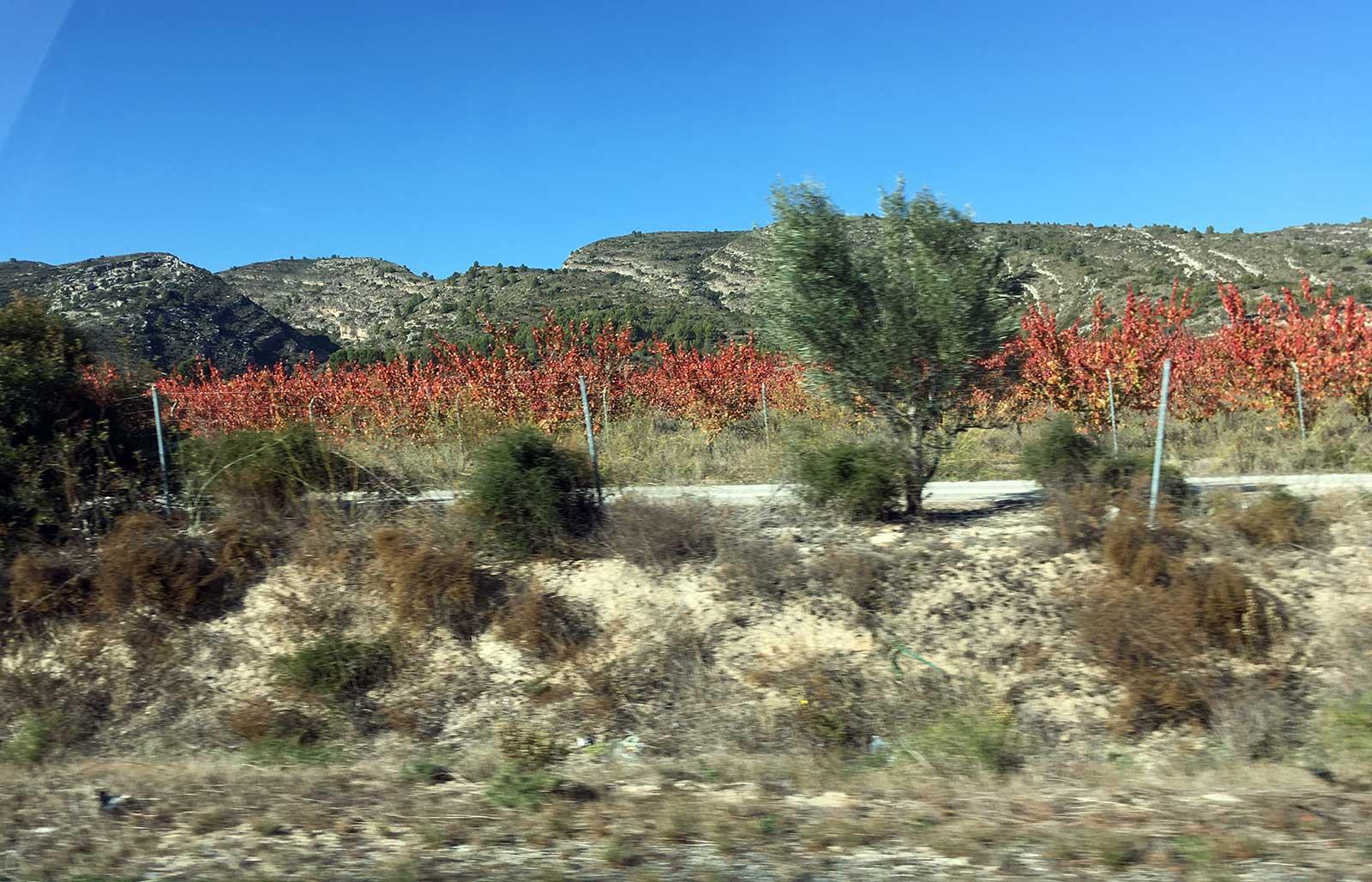 Desde el coche en la autovía entre Montesa y Mogente