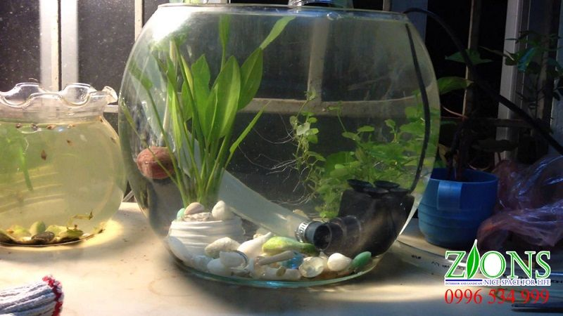 Image The Fundamentals of Best Betta Fish Tank Revealed