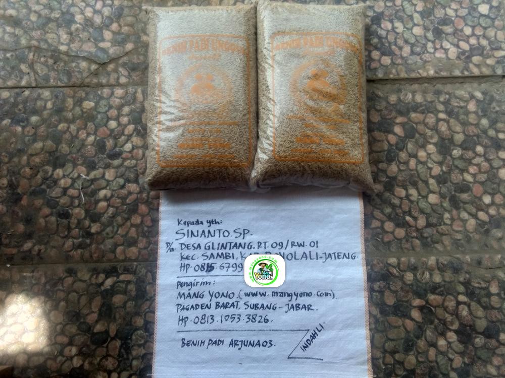 Benih Padi yang dibeli   SINANTO SP Boyolali, Jateng.   (Sebelum packing karung).