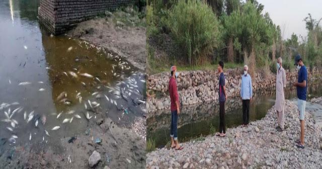 हिमाचल में ये कैसे दरिंदे: पानी में मिला दिया जहर, बड़ी संख्या में मछलियों की गई जान