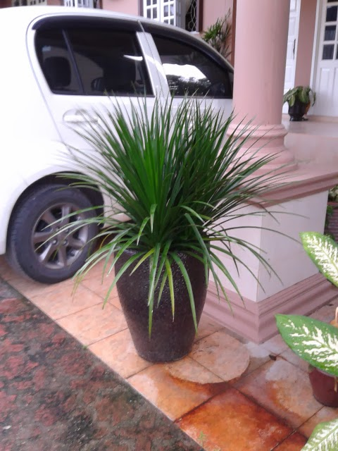 Pokok Hiasan Laman Rumah