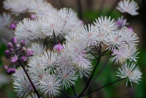 Borrifador, flores brancas. #PraCegoVer