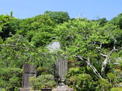 光則寺の新緑