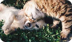 Pets for stress relief and the effect on serotonin levels