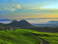 Menikmati Sejuknya Perkebunan Teh Ciater, Destinasi Wisata Alam Populer di Subang Jawa Barat