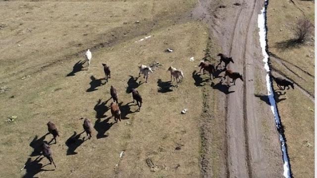 Διαβατήριο για τα ιπποειδή θεσπίζει το υπουργείο Αγροτικής Ανάπτυξης και Τροφίμων