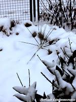 Steingarten im Winter